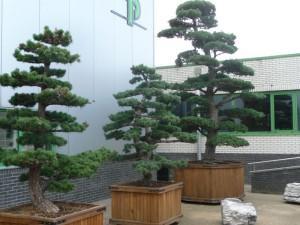 Созданы первые искусственные деревья